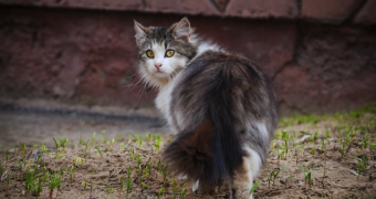 Почему кошка ушла из дома ?